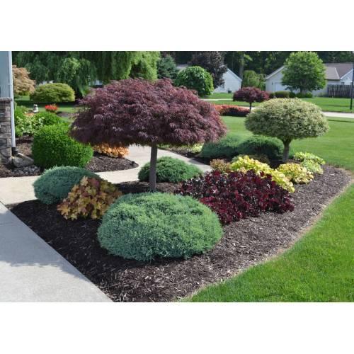 Medium Crop Of Basic Backyard Landscaping