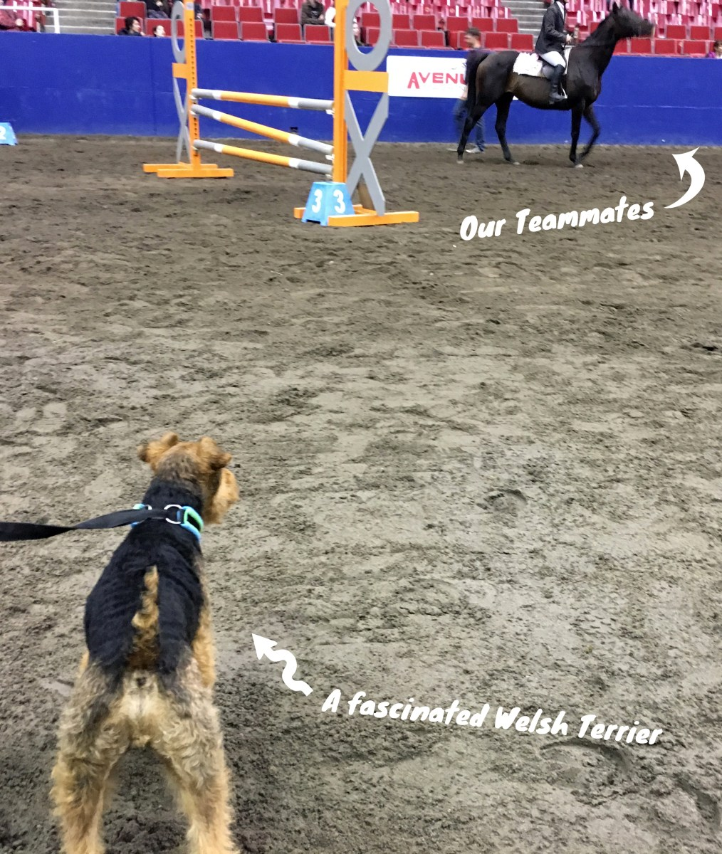 We Did a Horse & Dog Relay Show