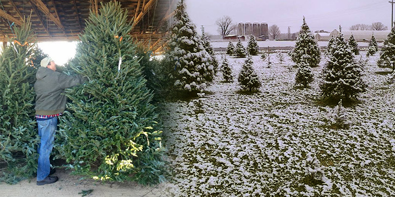 Cut-your-own and Fresh cut Christmas trees