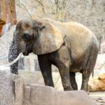 Learn About Amazing Elephants at The Milwaukee County Zoo's Elephant Appreciation Day
