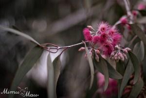gumblossoms