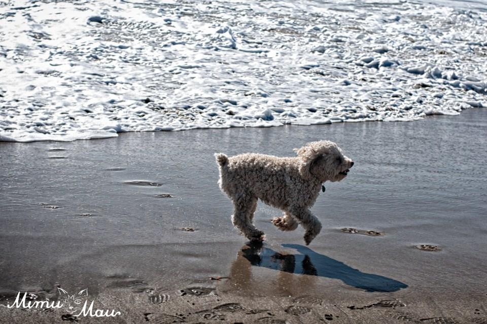 dogbeach