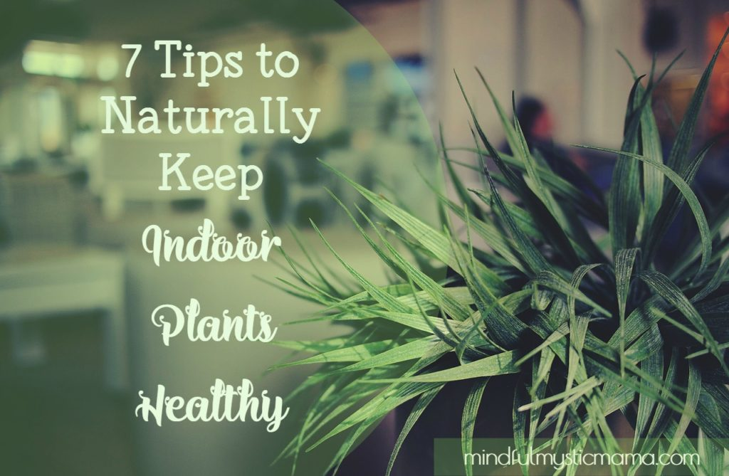 7 Tips to Naturally Keep Indoor Plants Healthy