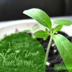 3 Steps to Start Your Plants Off Right