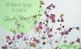 DIY Natural Sprays to Control Garden Pests