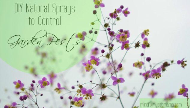 DIY Natural Sprays to Control Garden Pests