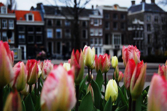 amsterdam-tulipani