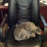 And a final shot of Denny commandeering my office chair