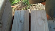 Then we started laying out the planks, 2x6s for the horizantals and 2x4s for the verticals