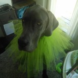 This is the puffy part for Hazels halloween witch dress, Denver had to try it on.