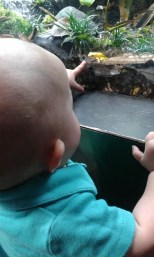 Miles found the frog... not very good camo if you ask me...