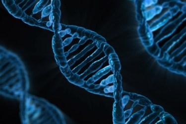 ADN domini públic