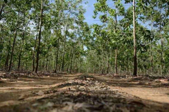 A Colombia le hace falta proteger 69 millones de hectáreas