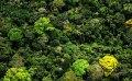 Parques nacionales de Colombia amenazados por el avance de la ganadería