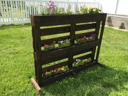 Medium Of Pallet Gardens Images