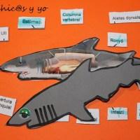 Proyecto primaria: Las partes del cuerpo del tiburón