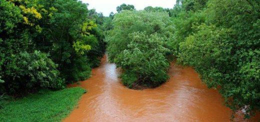 Misiones: Vida Silvestre celebra la iniciativa del municipio de Andresito para conservar y recuperar sus cuencas hídricas