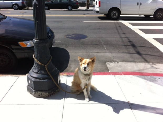 A dog waits for their owner in front of Bite Me Sandwiches on South Van Ness Avenue.