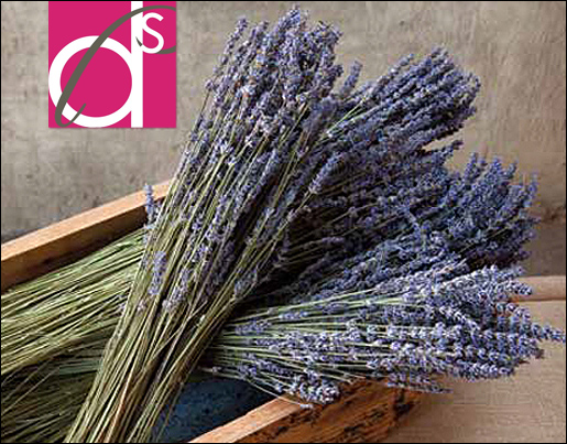 dried-lavender