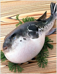 fugu_discimage