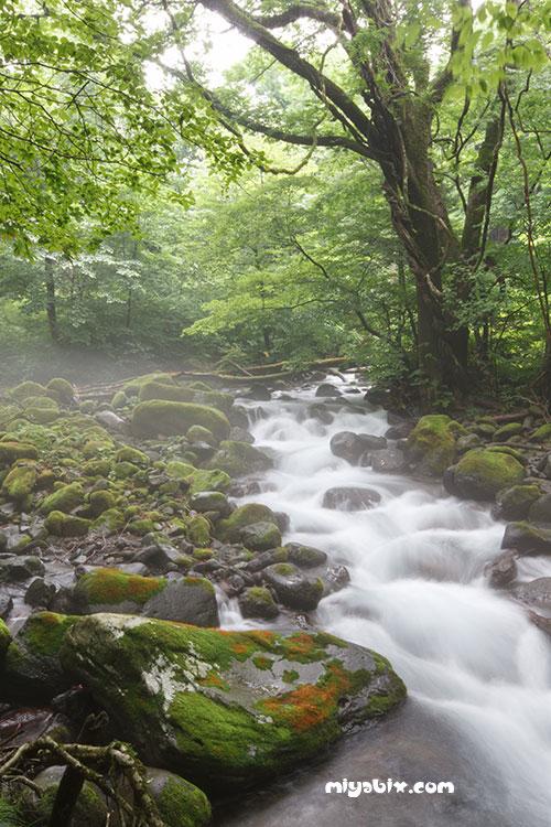 尚仁沢,湧き水