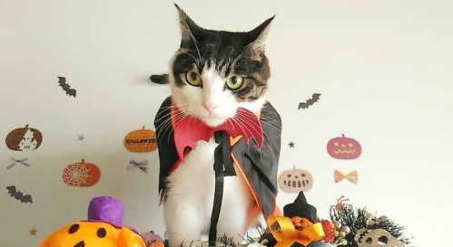 ハロウィンの猫メイク簡単なやり方!可愛い・仮装に似合う方法