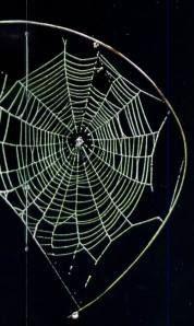 21-25-34-sarang-laba-laba