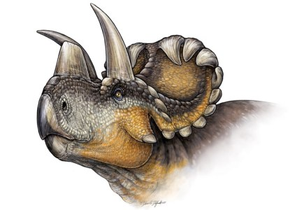 horned-dinosaur-discovered