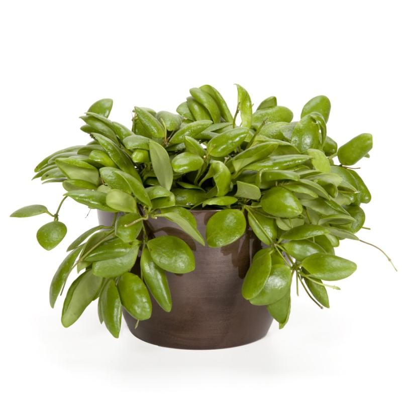 Large Of Exotic Angel Plants