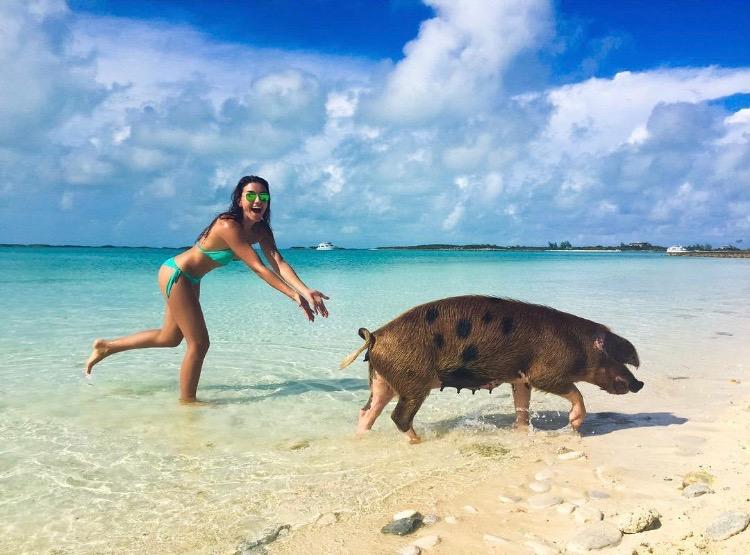 swim with pigs, bahamas
