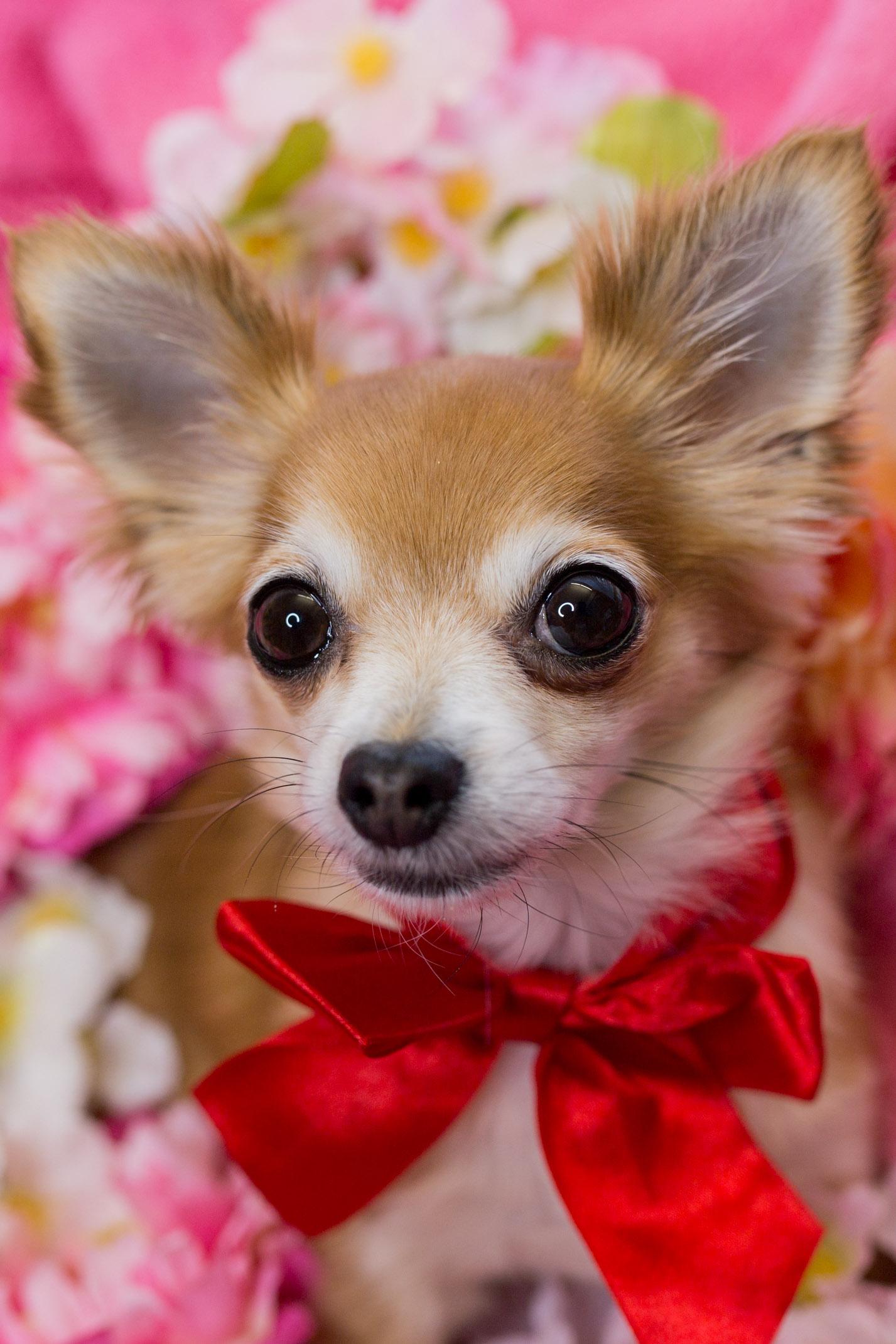 Fullsize Of Toto The Dog