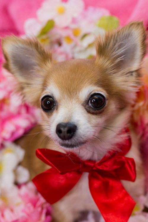 Medium Of Toto The Dog