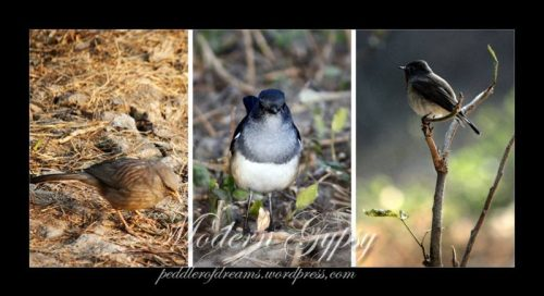 Small birds, Bharatpur Bird Sanctuary