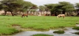 الصومال سوق سياحي واعد