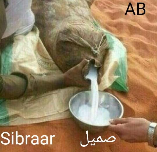 sibraar