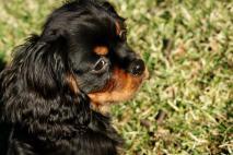 zeno up close in yard feb 5 2013
