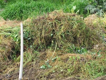 Mountain of removed weeds: 3ft wide x 3ft high x 6ft long