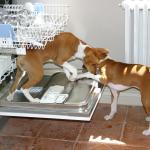 prewash by puppies Charlie and Zizou