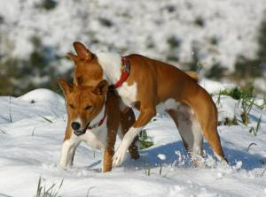 Charlie and Saba. Winter 2012