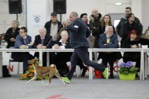 Charlie and his handler flying together in the main ring of Fermo