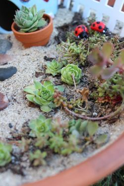 Small Of Little Fairy Garden