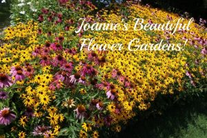 Joanne's beautiful flower garden.  So glad I am able to share one of the prettiest flower gardens with you!