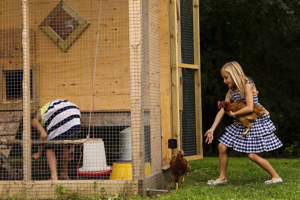 girl chasing escaping chickens during modern Cornwall family photography session