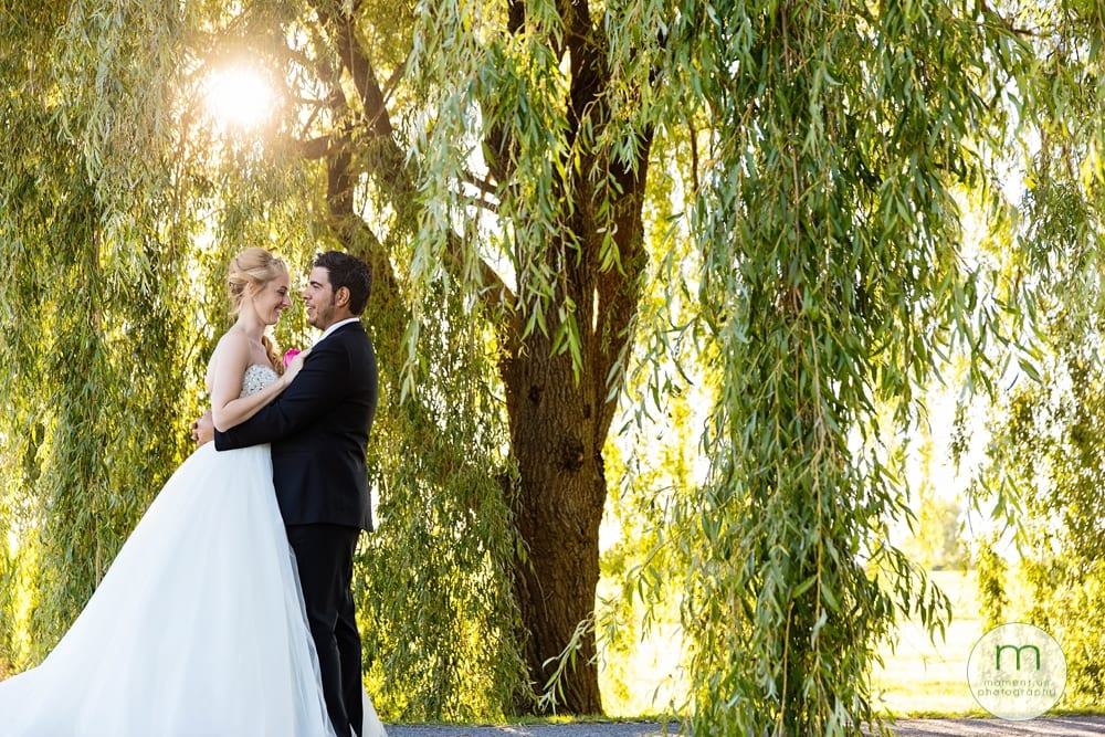 bride and groom under willow tree in sunshine