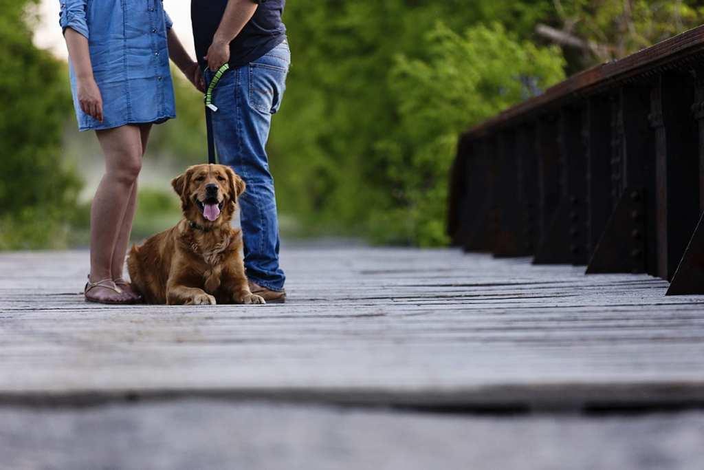 Dog rests on Peanut Line Bridge during St Raphael's engagement session