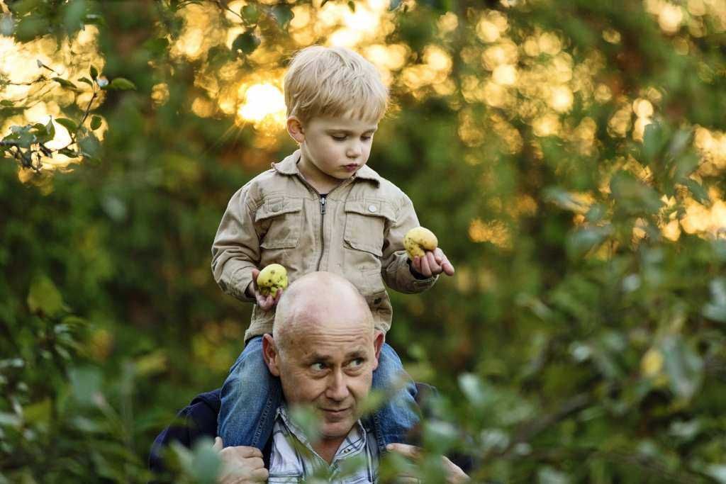inquisitive little boy holding apples sitting on dad's shoulders