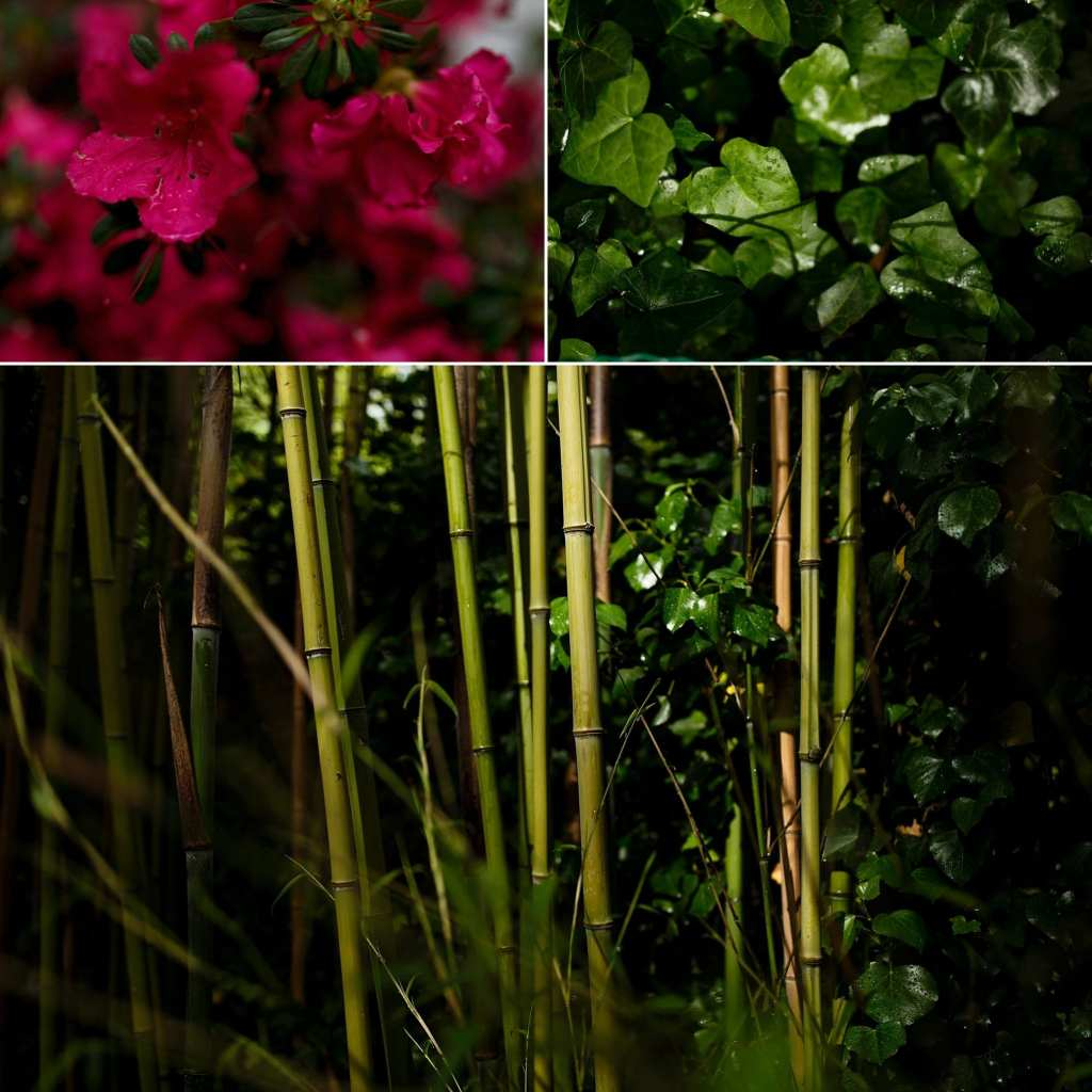 collage of bamboo ivy and bold pink blooms at Italian villa