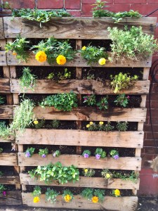 vertical garden at Ultimo Coffee