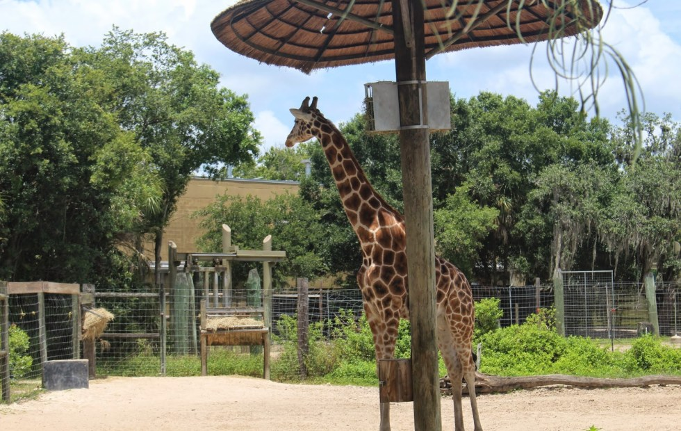 Top-Tips-Visiting-Lowry-Park-Zoo-Tampa