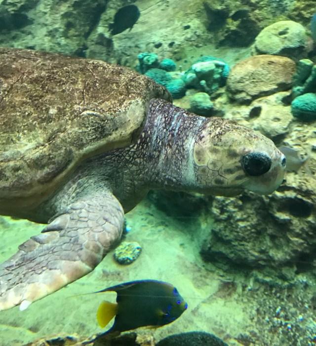 Turtle-Track-Sea-World